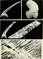 Conodont ultrastructure - the subfamily Acanthodontinae (1975) (20492810170).jpg