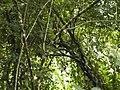 CostaRica (6108518513).jpg