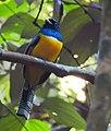 Costa Rica DSCN1102-new (30762087750).jpg