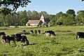 Cows in meadow by Minster Lovell ruin - geograph.org.uk - 663666.jpg