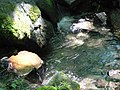 Creek (0b26633b003d48ab8e106bdb9d89632d).JPG
