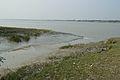 Creek - Riverbank Ichamati - Sundarban Biodiversity and Interpretation Area - Taki - North 24 Parganas 2015-01-13 4677.JPG