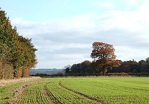 English: Cropfield and Woodland near Bourton, ...