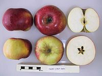 Cross section of Fairy (Cormack), National Fruit Collection (acc. 1967-069).jpg