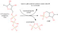 Cyclic nucleotide synthesis.png