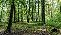 Dülmen, Naturschutzgebiet -Franzosenbach- -- 2014 -- 0045.jpg