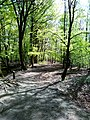 DE NRW Muenster Wolbecker-Tiergarten004.jpg