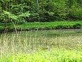 DSC02309 Teich zur Aufzucht autochthoner Fischarten. , . ,.jpg