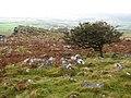 Dartmoor, Cox Tor - geograph.org.uk - 1031257.jpg