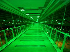 Davenport Skybridge - Inside the skybridge, lit up at night.