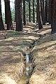 Davis Creek Park - panoramio (24).jpg