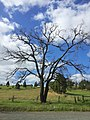 Dead Tree Reaching for the Sky - panoramio.jpg