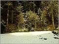 December Black Mountains Foret Noir - Master Mythos Black Forest Photography 2013 Winter Forest - panoramio.jpg