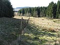 Deer fence and forestry - geograph.org.uk - 1231644.jpg