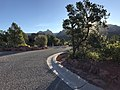 Deer in Sedona, Arizona.jpg