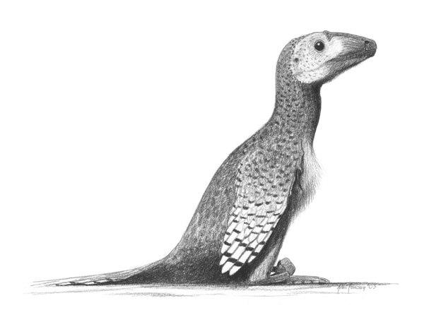 Deinonychus-antirrhopus jconway