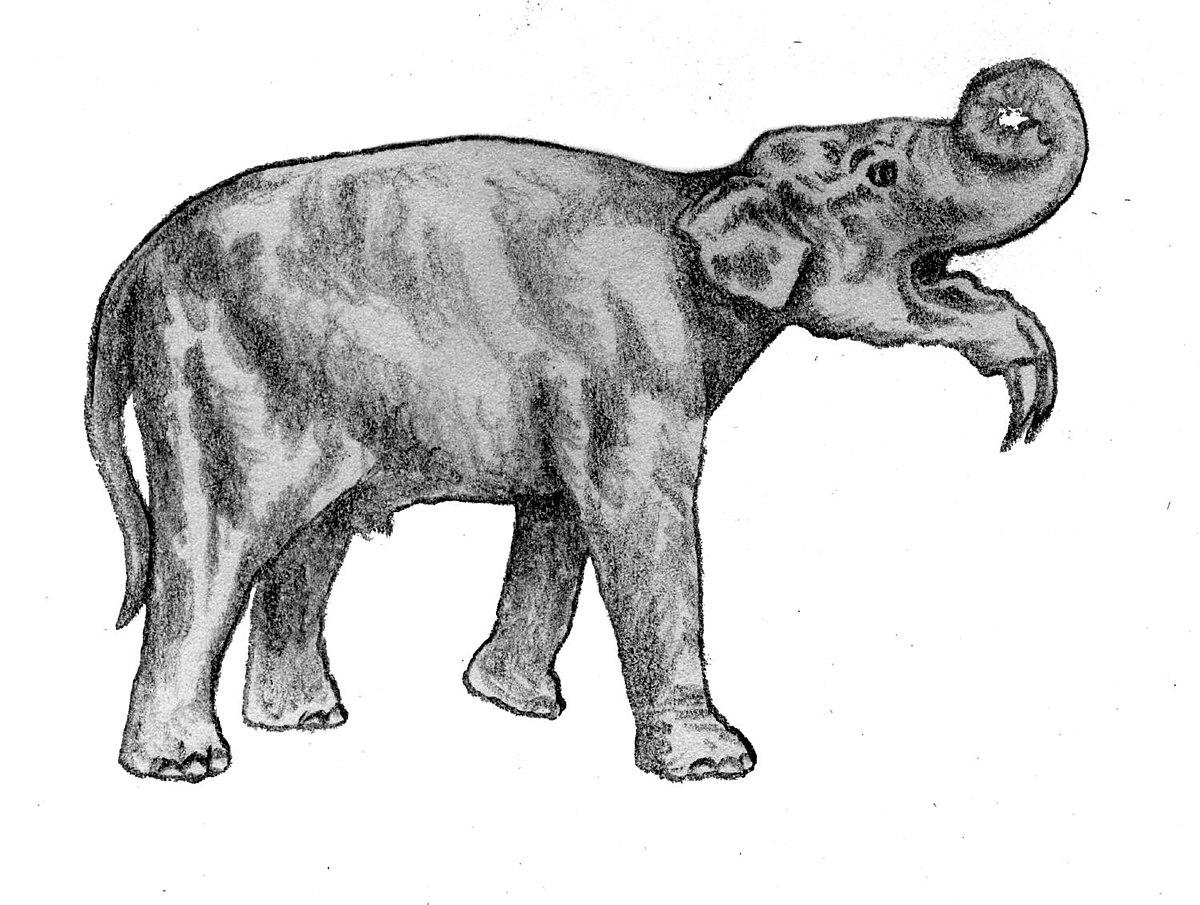 Animali estinti dell 39 europa wikipedia - Foto di animali dell oceano ...