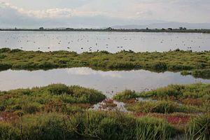 Ebro Delta - Ebro Delta estuary and wetlands, with waterfowl.