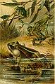 Deutschlands Amphibien und Reptilien (1890) (20878813842).jpg