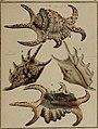 Die Flügelschnecken (Strombea) - in Abbildungen nach der Natur mit Beschreibungen (1845) (20292539754).jpg