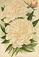 Die Gartenwelt (1899) (20926553951).jpg