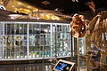Displays - National Museum of Nature and Science, Tokyo - DSC07489.JPG
