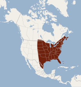 Distribution of Lasiurus borealis.png