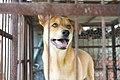 Dogs (26148664541).jpg