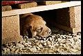 Dogs (5080844953).jpg