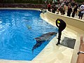 Dolphin Training (7980941566).jpg