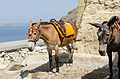 Donkey trail - Fira - Thira - to Mesa Gialos port - Santorini - Greece - 02.jpg
