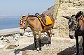 Donkey trail - Fira - Thira - to Mesa Gialos port - Santorini - Greece - 02.jpg
