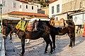 Donkeys Hydra island Greece (43958837745).jpg