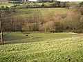 Donkeys grazing in the Black Brook valley, Stainland - geograph.org.uk - 692345.jpg