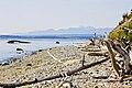 Driftwood on double bluff beach.jpg