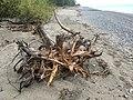Driftwood on the beach 20200518 154918985 iOS.jpg