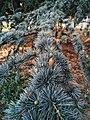 Drveće u parku Svetog Save u Nišu (6).jpg
