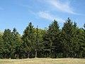 Drvece u parku (1).jpg