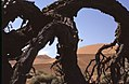 Dunst Namibia Oct 2002 slide129 - seid umschlungen.jpg