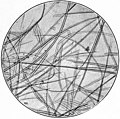 EB1911 - Fibres - Fig. 11.jpg