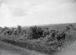 ETH-BIB-Heuschreckenschwarm-Kilimanjaroflug 1929-30-LBS MH02-07-0250.tif