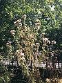 EcoParc des Carrieres Fontenay sous Bois 1.JPG