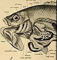 Elementary zoology (1902) (21241557581).jpg