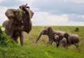 Elephant against bufallo for attack. nairobi, Kenya.png