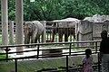 Elephant in Shanghai Zoo.JPG