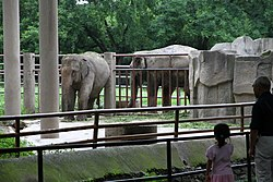 Elephant in Shanghai Zoo.JPG