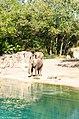 Elephant near by the sea.jpg