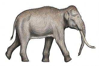 Straight-tusked elephant - Life restoration