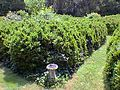 English Boxwood Maze Garden.jpg