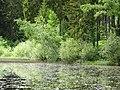 Entenweiher Hinterzarten 06.jpg